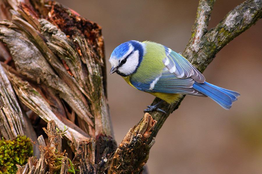 Viac informácií o birdwatchingu aj na webovej stránke http://www