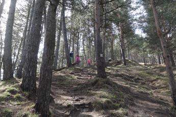 Stúpanie lesom smerom k rozhľadni