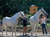 Vychádzky na koňoch